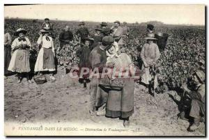 Old Postcard Folklore Wine Harvest Vineyard in the Medoc Distraction pickers