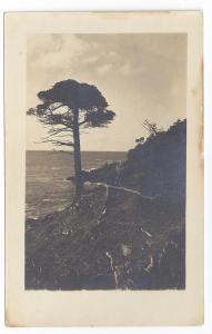 RPPC Coast Landscape Tree on Bankside Dramatic
