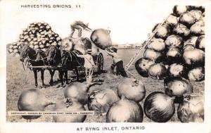 Byng Inlet Ontario~Farmers Harvest Exaggerated Onions~Ladder Up Stack~1944 RPPC