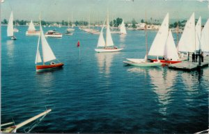 Newport Bay CA Regatta Day Yacht Club Sailboats Unused Postcard F48a