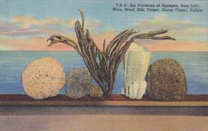 Florida Six Varieties Of Sponges Found At Tarpon Springs Curteich