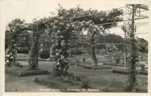 Palermo Buenos Aires Argentina~RPPC of Rose Gardens~El Rosedal Closeup~c1920 pc