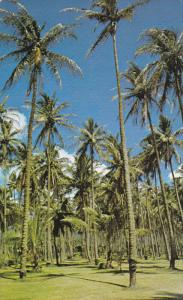 Coconut Groves, Near Wailua River, Was Once A Tahitian Settlement In 100 A.D....