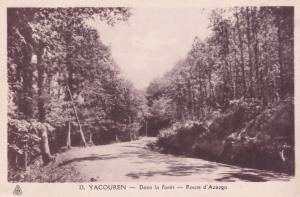 Yacouren Forest Road Northern Algeria Syria Old Postcard