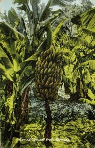bermuda, Banana Tree and Fruit (1930) U.S. Stamp