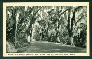 South Carolina Low Country Avenue Moss Covered Trees Charleston SC Postcard
