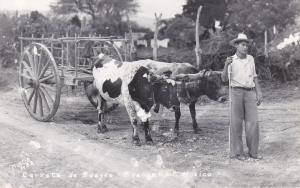 RP: Carreta de Bueyes , C. Valles, S.L.P. , Mexico , 30-40s