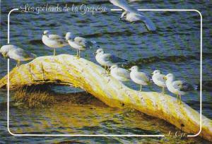 Canada Shoreline with Sea Gulls Perce Quebec