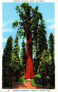 California Sequoia National Park General Sherman World's Lar...