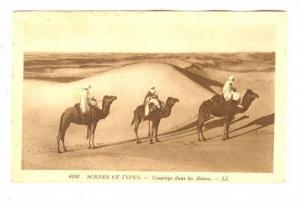 Arab men on Camels, Desert; Touaregs dans les Dunes, 1910s