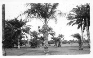 B86478 coconut  types folklore   nigeria africa