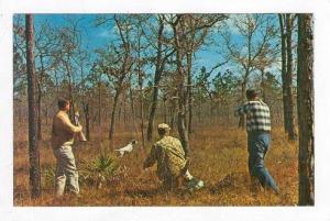 Hunters Shoot Birds w/ Bird Dogs Homosassa Springs,FL 1950-60s