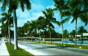 Florida Fort Lauderdale Royal Palms Along Las Olas Boulevard