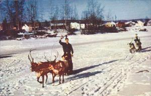 Alaska Reindeer Team and Sled On Chena At Fairbanks 1965