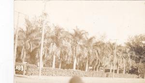 RP: Palms along Road , Hawaii , 00-10s