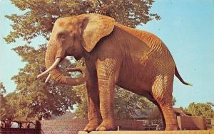 Wild Animals Fauna: London Zoo Regent's Park, Elephant, by M. Lyster
