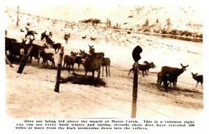 Real Photo Postcard 1930-1950 Deer Being Fed A Mouth Of Mores Creek Idaho Winter