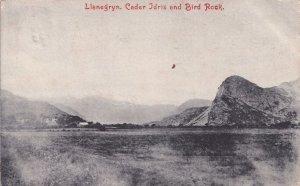 Llanegrin Cedar Idris Bird Rock Gwynedd Welsh Antique Postcard