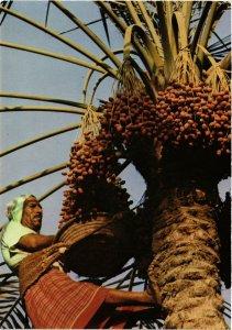 PC CPA BAHRAIN, BAHREIN, HARVESTING THE DATE PALM, Modern Postcard (B3772)