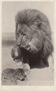 RP: Gay's Lion Farm , EL MONTE , California , 1925