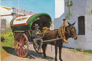 Donkey Cart , Portugal - Algarve - Alibufeira , 50-70s