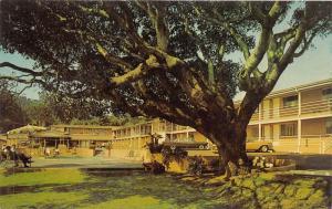 Monterey California~Carmel Hill Motor Lodge on Munras Avenue~50s Cars~Postcard
