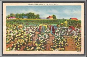 United States Picking Cotton in The Sunny South