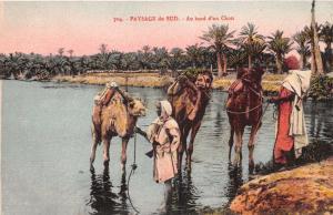 NORTH AFRICA~PAYSAGE du SUD~au BORD 'un CHOTT ~SALT LAKE~CAMELS PHOTO POSTCARD