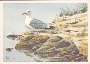 Birds Sea Gull