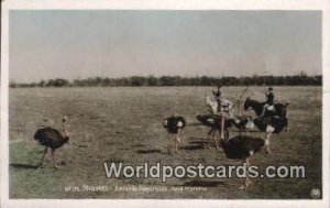 Misiones, Juntando Avestruces Republic Argentina Argentina Postal Used Unknown