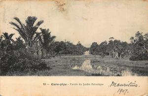 Mauritius Cure-pipe Entree du Jardin Botanique Garden 1907 Postcard