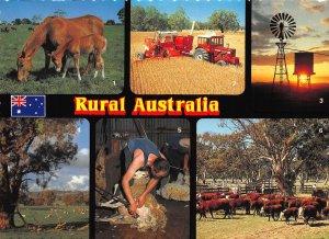 Australia Rural Harvesting TIme Windmill Shearing TIme Cattle Postcard
