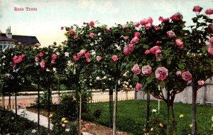 California Beautiful Rose Trees