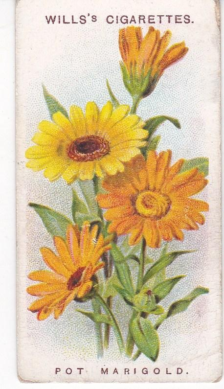 Cigarette Card Wills Old English Garden Flowers 2nd Series No 4