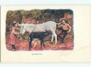 Divided-Back ANIMAL SCENE Great Postcard AA9611