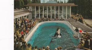 VANCOUVER , B.C. , Canada, 1950-60s ; Killer Whale Skana jumping