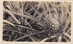 RP; Patch of pineapples, 10-20s