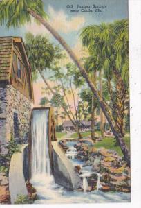 Florida Ocala Juniper Springs Curteich
