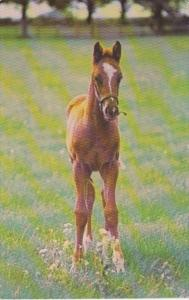New York Saratoga Springs Saratoga Aqueduct Belmont Thoroughbred Foal