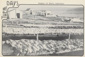 Fish Flakes at Forteau Labrador Canada Postcard