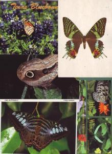 P197 JLs 5 postcard lg 4 1/4 x 6 butterfly excellent cond.