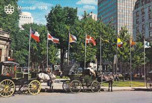 Caleches Horse Drawn Carriage Dominion Square Montreal Quebec Canada