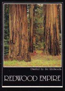 California Redwood Empire Dwarfed By The Redwoods