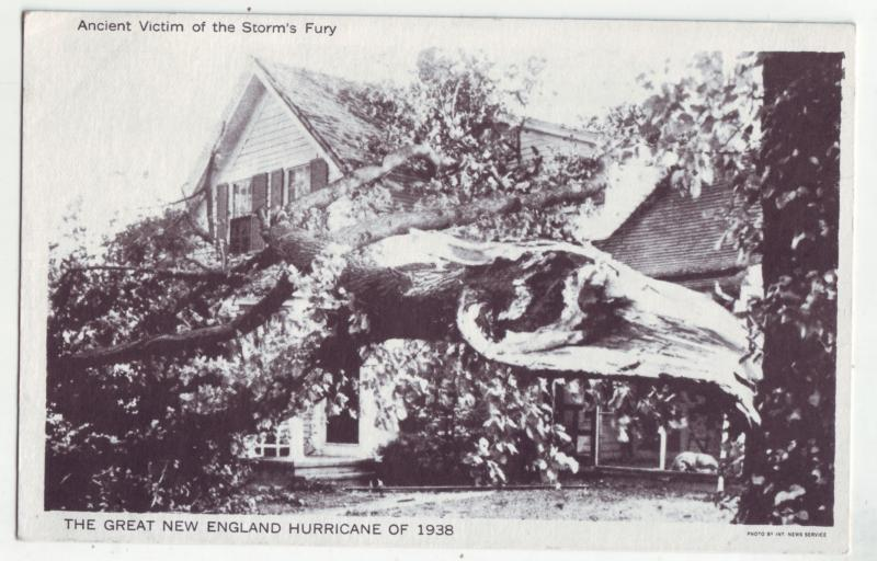 P1174 vintage postcard unused view large tree down 1938 new england hurricane