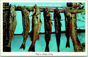 WALKER, Minnesota Greetings Postcard Fish Scene / Fishing Curteich Chrome c1960s