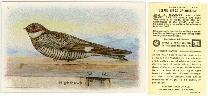Arm & Hammer,NIGHTHAWK, Useful Birds 5th series #9,1914