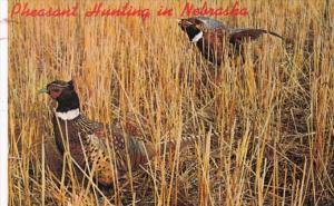 Nebraska Pheasant Hunting Season