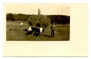 Haying circa 1905-1909   *RPPC