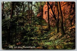 Muscatine Iowa~Wild Cat Den~View Up Bluffs~1909 Postcard