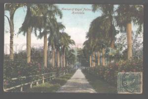 106212 USA HAWAII Avenue of Royal Palms Honolulu Vintage PC
